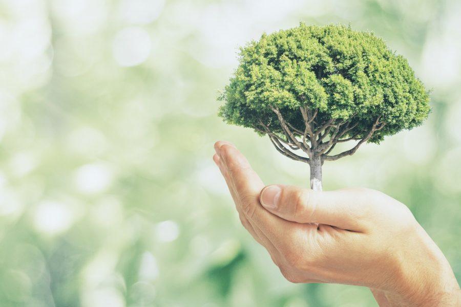 Екологичен Начин На Живот, Който Може Да Спаси Земята